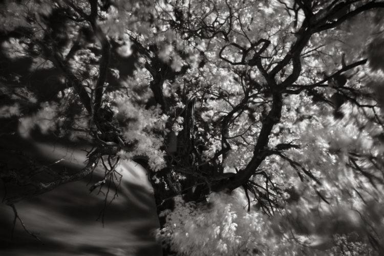 """""""Drzewa-Cienie-Śnienie"""" na Międzynarodowym Festiwalu Fotografii Białystok Interphoto 2018"""