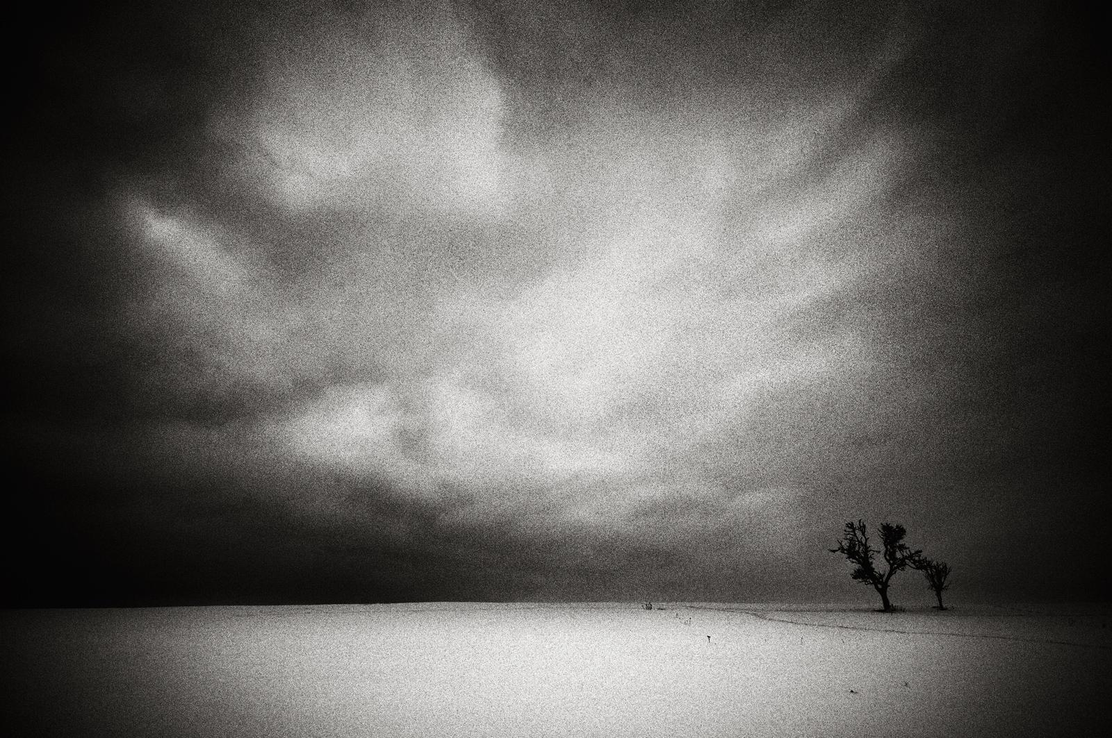 Trees Shadows Dreaming
