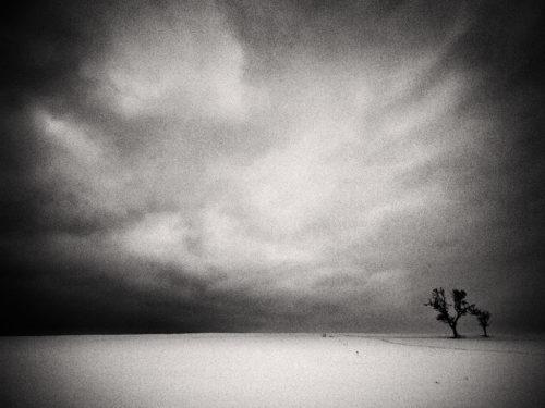<em>Drzewa-Cienie-Śnienie</em>